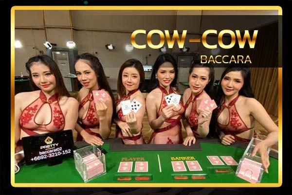 บาคาร่า วัววัว